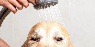 Tondeuse électrique pour chien : laquelle choisir ?
