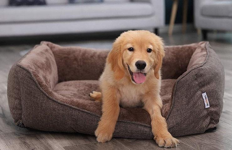 Comment réussir l'achat de son panier pour chien ?